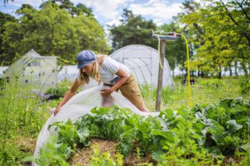 Ekologisk odling