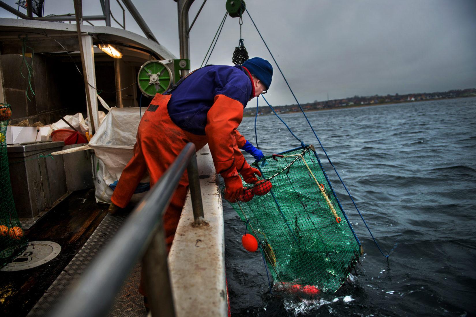 En person på en båt tar upp fångad fisk.